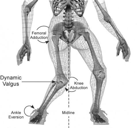 anatomy and ski biomechanics