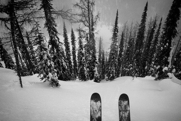 tree powder skis